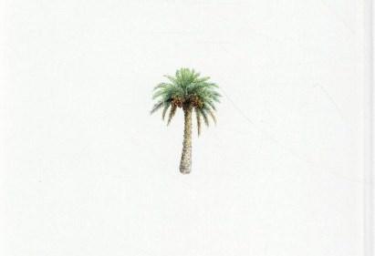 Un palmier à marier, Satomi Ichikawa, L'école des Loisirs